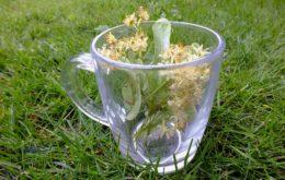 erbe per la menopausa