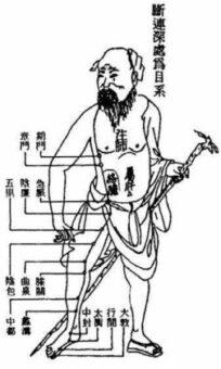 fegato e medicina cinese