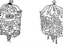 organi e visceri
