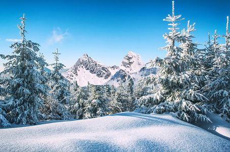 oligoelementi dell'inverno
