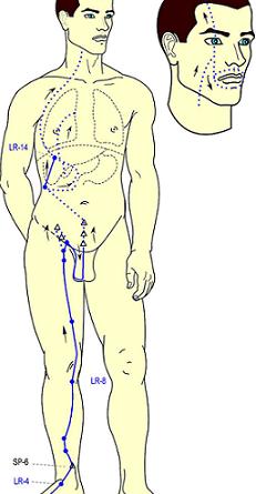 Canale del Fegato